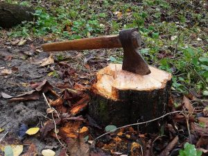 Stump-Removal-Sydney stump removal